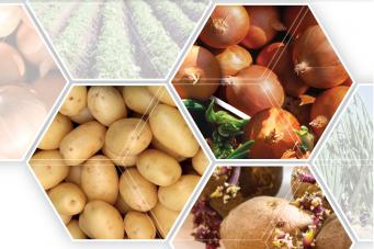 Toepassing van HIMALAYA in aardappelen en uien