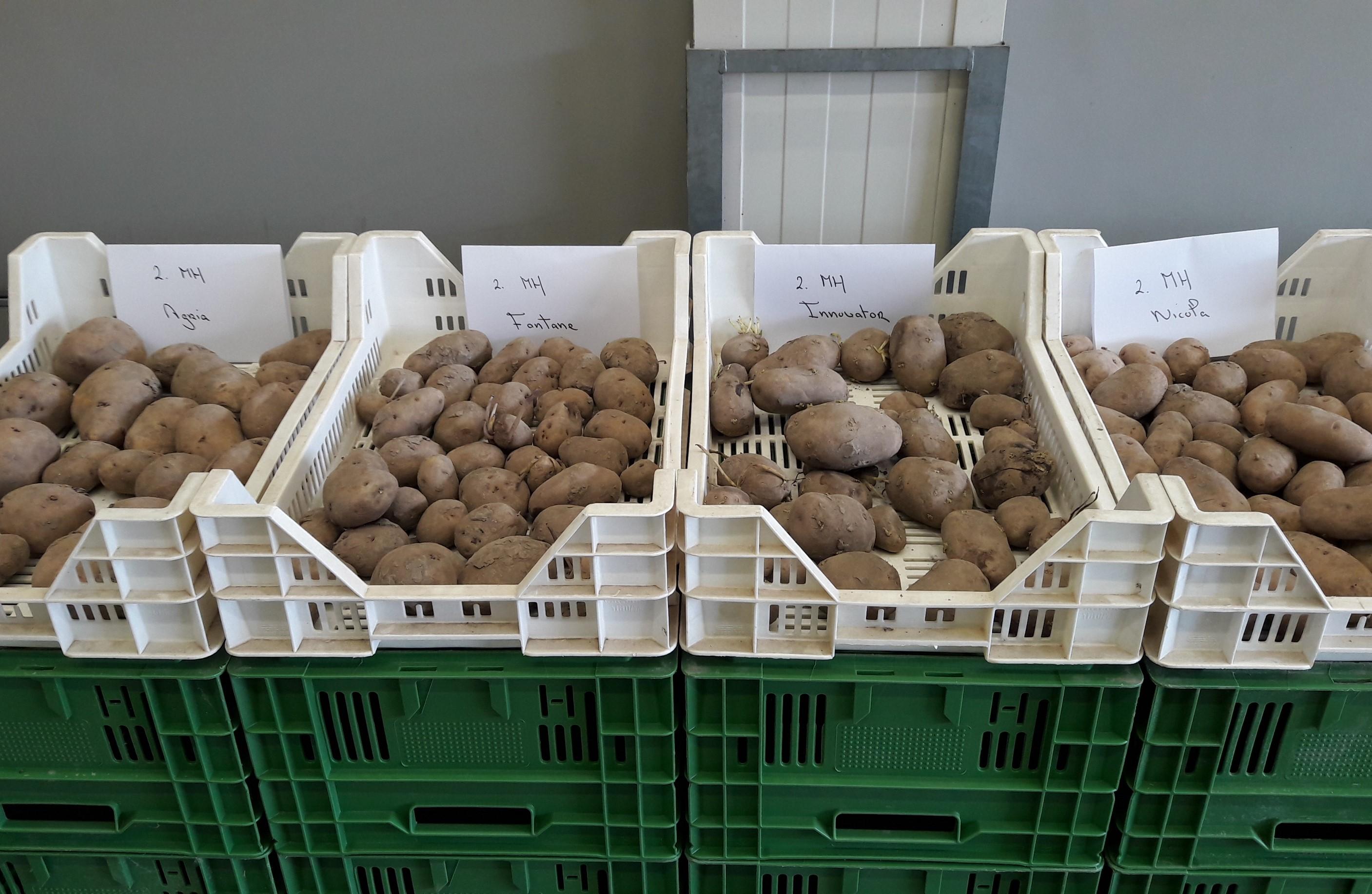 Positief effect van HIMALAYA op aardappel kwaliteit