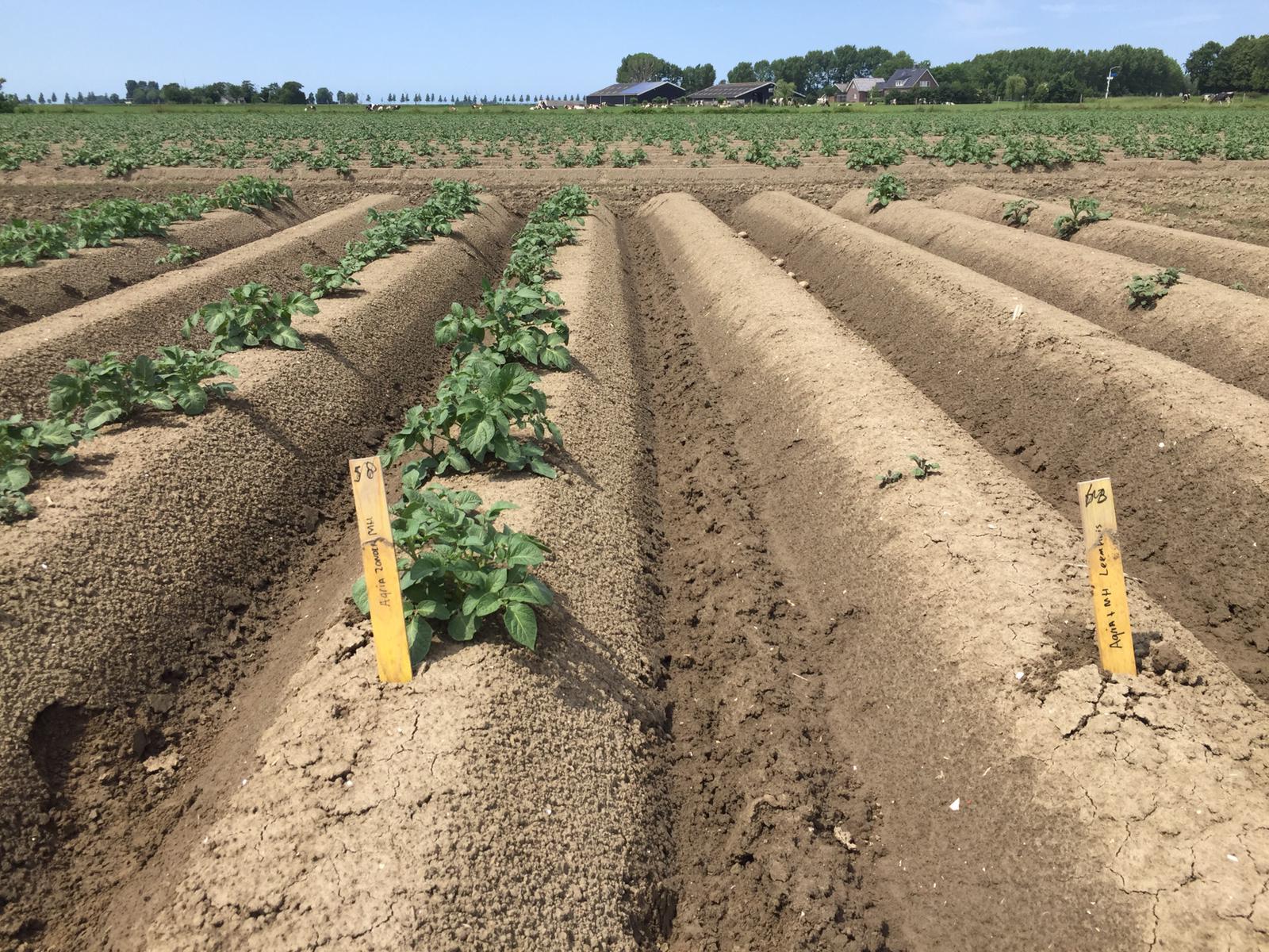 HIMALAYA basis voor optimale bestrijding van aardappelopslag